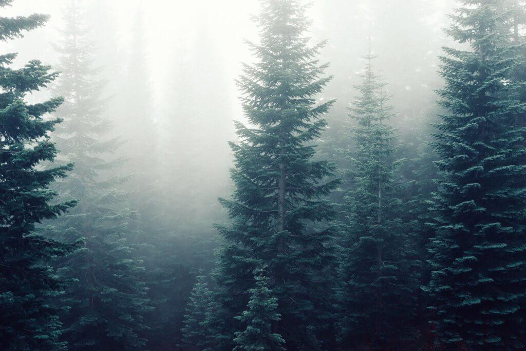 estonianforest-1-1024×683